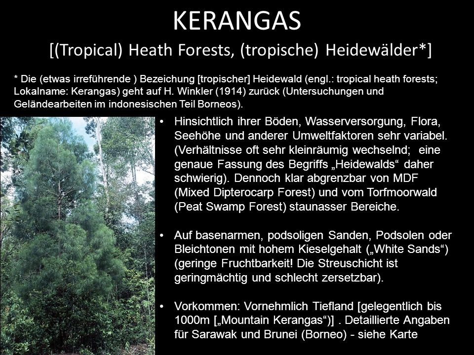 [(Tropical) Heath Forests, (tropische) Heidewälder*]